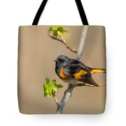 American Redstart Tote Bag