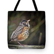 American Robin Fledgling Tote Bag