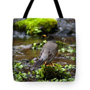 American Robin In Garden Springs Creek Tote Bag