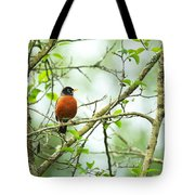 American Robin On Tree Branch Tote Bag