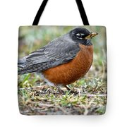 American Robin With Muddy Beak Tote Bag
