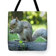 American Squirrel Tote Bag