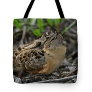 American Woodcock At Rest Tote Bag