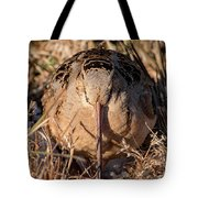 American Woodcock Head On Tote Bag
