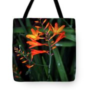 Amid The Tramping Tote Bag