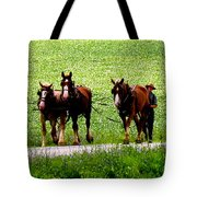 Amish Horse Team Tote Bag