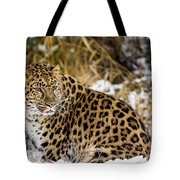 Amur Leopard In A Snowy Forrest Tote Bag