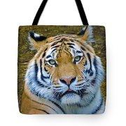 Amur Tiger 1 Tote Bag
