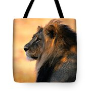 An Adult Male African Lion, Panthera Tote Bag