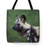 An African Hunting Dog Tote Bag