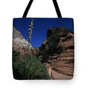 An Agave Plant In The Desert Landscapt Tote Bag
