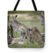 An Alert Mob Of Eastern Grey Kangaroos Tote Bag