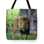 An Amazing Look At A Prowling Lion Standing In Grass Tote Bag
