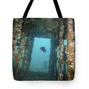 An Atlantic Spadefish Swims Amongst Tote Bag