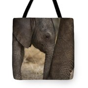 An Elephant Calf Finds Shelter Amid Tote Bag