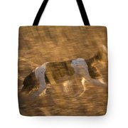 An English Springer Spaniel Points Tote Bag