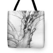 An Oak In The Park 2002  Tote Bag