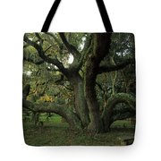 An Old Live Oak Draped With Spanish Tote Bag