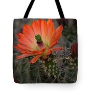 An Orange Beauty Of A Hedgehog  Tote Bag