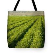 An Organic Carrot Field Tote Bag
