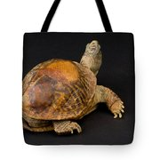 An Ornate Box Turtle With A Fiberglass Tote Bag