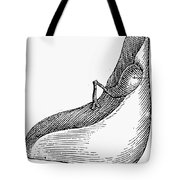 Anatomy: Liver Tote Bag