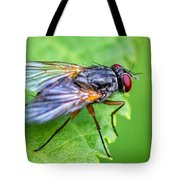 Anatomy Of A Pest Tote Bag