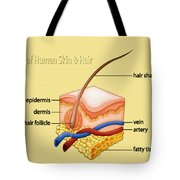 Anatomy Of The Skin And Hair Tote Bag