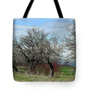Ancient Apples Budding Out Tote Bag