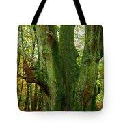 Ancient German Oak Trees In Sababurg Tote Bag