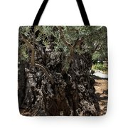 Ancient Olive Tree Tote Bag