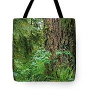 Ancient Trees Tote Bag