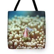 Anemone And Pink Clownfish Tote Bag