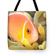 Anemone, Close-up Tote Bag