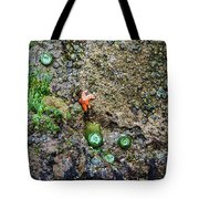 Anemone Reflection  Tote Bag
