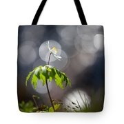 Anemone  Tote Bag by Rikard Strand
