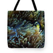 Anemonefish Hiding Tote Bag
