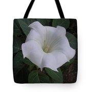 Angel Trumpet - Color Tote Bag