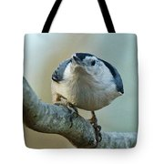 Angry White Breasted Nuthatch Tote Bag