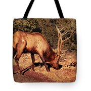 Animal - Elk -  An Elk Eating Tote Bag