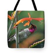 Anna's Hummingbird 1 Tote Bag