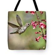 Anna's Hummingbird And The Penstemon  Tote Bag