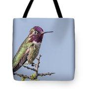 Anna's Hummingbird Perched Tote Bag