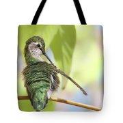 Anna's Hummingbird - Preening Tote Bag