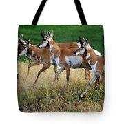 Antelope 1 Tote Bag