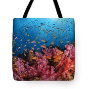 Anthias Fish And Soft Corals, Fiji Tote Bag
