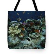 Anthias Fish, Anemonefish And Basslets Tote Bag