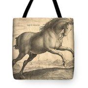Antique Horse Engraving - Equus Regius Tote Bag