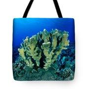 Antler Coral Tote Bag
