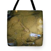 Appalachian  Native Tote Bag by Randy Bodkins